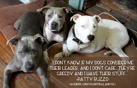 Pitbull Quotes 9 Awesome Pitbull Dog Quotes Beauteous Best 24 Pit Bull Quotes Ideas On