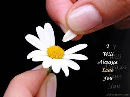 Flowers Love Quotes Fascinating Flowers Love Quotes Alluring Flowers Love Quotes 48 For Giving W48