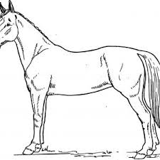 horse coloring book refrence horse coloring books best printable horse coloring pages coloring