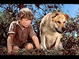best old yeller images disney films disney  famous mutts of the last century
