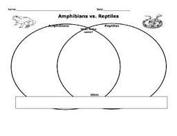 Difference Between Amphibians And Reptiles Venn Diagram Amphibians Vs Reptiles Amphibians Reptiles Animals