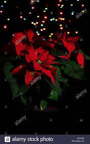 Leuchtende Weihnachtssterne Stockfotos Leuchtende