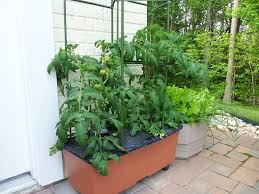 Diy tomato cage Wood Diy Earthbox Tomato Cage Balcony Garden Web 18 Diy Tomato Cage And Stake Ideas Balcony Garden Web