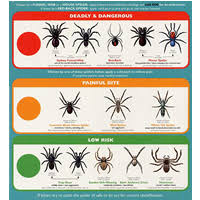 Free Spider Identification Chart Free Spider Identification Chart Simple Deals