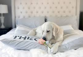 designer dog bed duvet covers