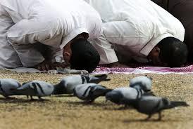 Keistimewaan Burung Merpati di Tanah Suci