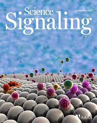 the tyrosine kinase src promotes phosphorylation of the kinase tbk1 to facilitate type i interferon ion after viral infection science signaling