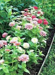 cutting flower garden layout cutting garden design beautiful cut flower garden plans ideas about cut flower cutting flower garden