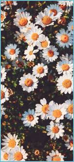 Floral Iphone Backgrounds Tumblr ...
