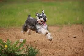 「フリー 走る」の画像検索結果