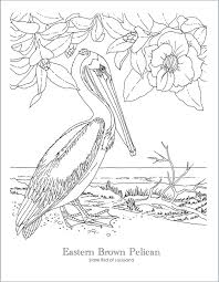 State Bird Coloring Pages Flanders Family Homelife