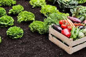 how to start a vegetable garden decent for beginners primary 8