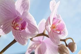 Oggi vedremo insieme come realizzare all'uncinetto un. Orchidea Phalaenopsis Consigli Per Coltivarla Community Lm