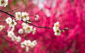 spring nature wallpaper hdwallpaperup