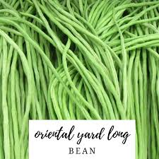 Asian long bean seed
