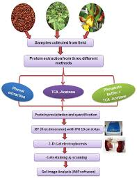Protein In Seeds Chart Frontiers A Comparative Method For Protein Extraction And