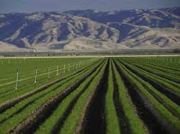 Row Crops Nelson Irrigation