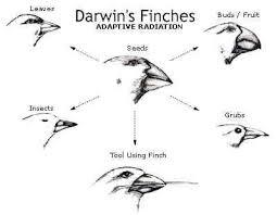 charles darwin theory of evolution theory of evolution  charles darwin theory of evolution theory of evolution charlesdarwin darwins finchs