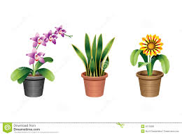 indoor home office plants royalty. blooming gazenia home indoor office orchid plant plants royalty dreamstimecom