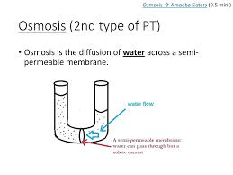 Venn Diagram For Osmosis And Diffusion Diagram Amoeba Venn Diagram Osmosis I Sisters Min Amoeba Venn Diagram