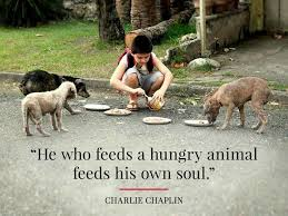 Love Animals Quotes Interesting Charlie Chaplin Animal Quotes Adorable Pinterest Charlie