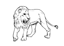 Lion Real Animals Coloring Pages For