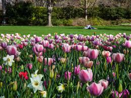 dallas arboretum ranks among the best botanical gardens in america