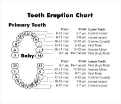 Dental Chart With Teeth Numbers Diagram Of Tooth Numbering