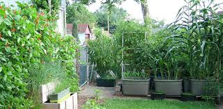 self watering container garden totes self watering sub irrigated planters container garden how to build a diy self watering container gardening system for