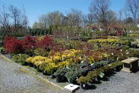 garden center nj. Nursery And Garden Center. Spring Shrubs Center Nj O