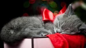 res 2560x1600 kitten wallpaper pictures