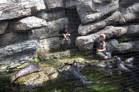 Acquario di genova wikiwand