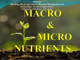 Plants Nutrients And Deficiency Toxicity Symptoms