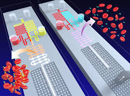 Lab On A Chip Us Researchers Develop New Device With Lab On A Chip Concept