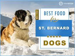 7 Best Foods To Feed An Adult And Puppy St Bernard In 2019
