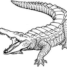 Small Picture Baby Crocodile Coloring Pages