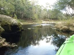 Suwannee River Paddling An Iconic River North Florida E Z