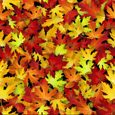 Fall Leaf Pattern Interesting Realistic Autumn Leaves Pattern Vector Graphics Free Vector In