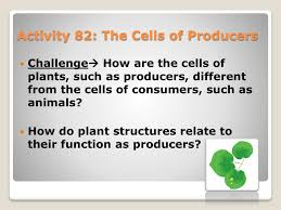 Producer And Consumer Venn Diagram Activity 82 The Cells Of Producers
