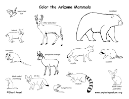 Small Picture Arizona Habitats Mammals Birds Amphibians Reptiles