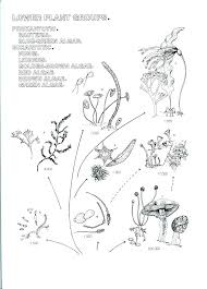 Botany Coloring Pages Botanical Coloring Page Coloring Books