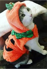 cute kittens in halloween costumes.  Halloween The 16 Cutest Halloween Costumes For Cats Kitten Costumes  Cat Dog And Cute Kittens In S