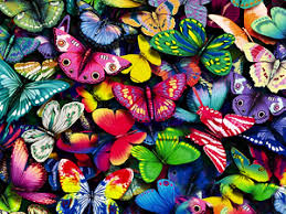 answers to kids questions about butterflies scholastic