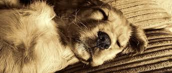 Die 50 Schönsten Gesammelten Sprüche Hunde Bekannte Zitate