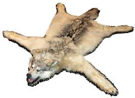wolf skin rug hide loading zoom uk faux with head