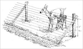 how to keep deer away from garden. a slanted wire fence is an effective solution to keeping deer out of the garden. are less likely jump that wide; vertical would how keep away from garden
