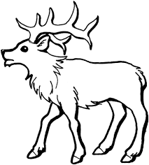 Small Picture Young Elk coloring page Free Printable Coloring Pages