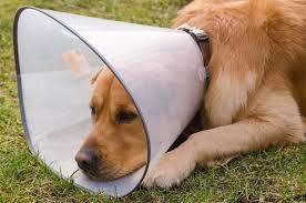 hot spots in dogs