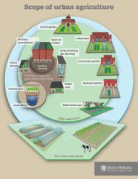 urban agriculture and the impact on sdg