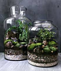 large glass terrarium waterfall with live moss plants in hex jar containers large glass terrarium